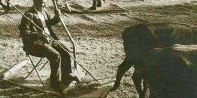 BABAMIN KARAYEMİŞLERİ / ARA GÜLER