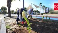 GMK Bulvarı'nda ağaçlandırma çalışmaları sürüyor