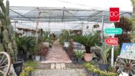 Muğla'da Üretiliyor, Ege ve Akdeniz'i Süslüyor…