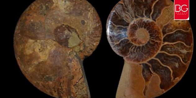 Bodrum Deniz Müzesinde 460 Milyon Yıl Öncesine Ait Fosil