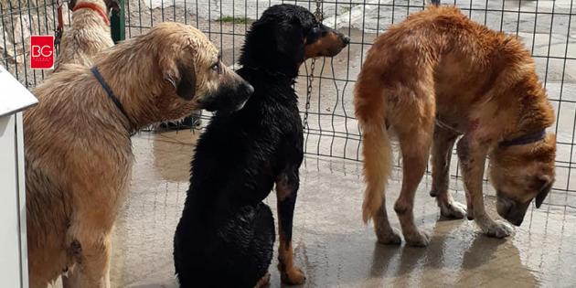 Ölüme Terkedilen Sahipli Köpeklerin Yürek Sızlatan Hikayesi