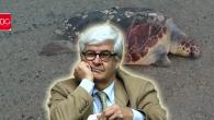 Caretta Caretta /Emin Varol Bodrum Gündem Yazıları…