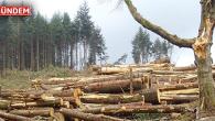 Milas'ta Ormanların Kesilmesini Durdurun